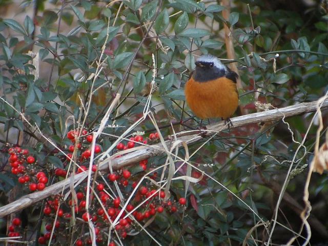 木の実と小鳥:クリックして大きな画像でご覧下さい